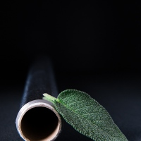 A Picture A Day : Sage Leaf With Aluminium Foil
