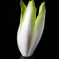 A Picture A Day : Belgian Endive (Indivia Belga)
