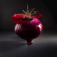 Red Onion On Dark Background