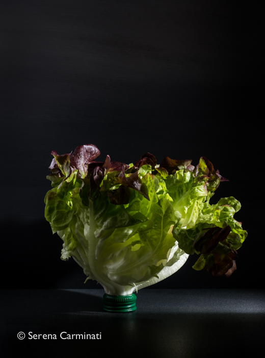 Red oak leaf lettuce with bottle cup