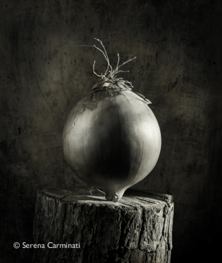 Onion on wood (black and white)