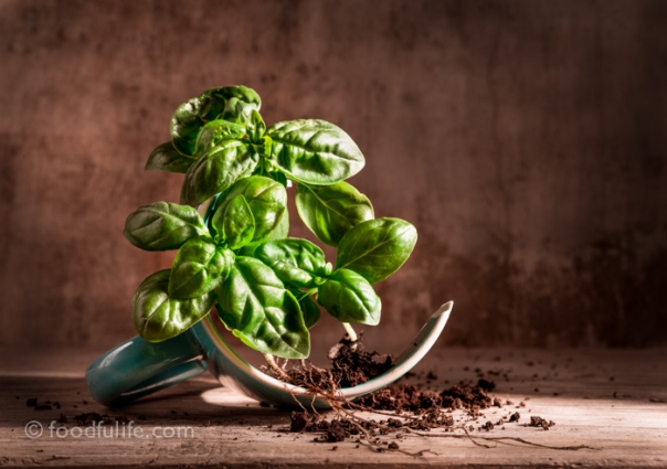 Basil with broken cup