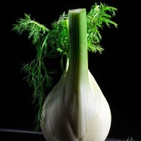 Fennel On Dark Background With Leaves