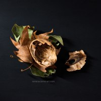 Leaves with Walnut Shell
