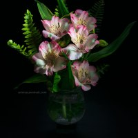 Alstroemeria Flowers With Fern