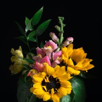 Sunflowers with Snapdragon (Antirrhinum-majus)